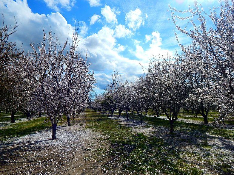 Słoneczny kwiecień dobry dla sadowników. Ale jest za mało pszczół