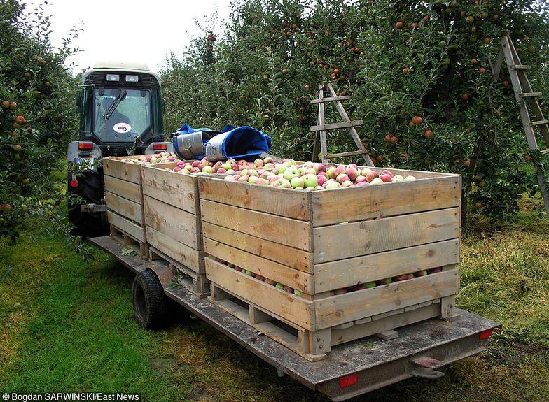 Dobra wiadomość dla sadowników. Unia za wzrostem stawek