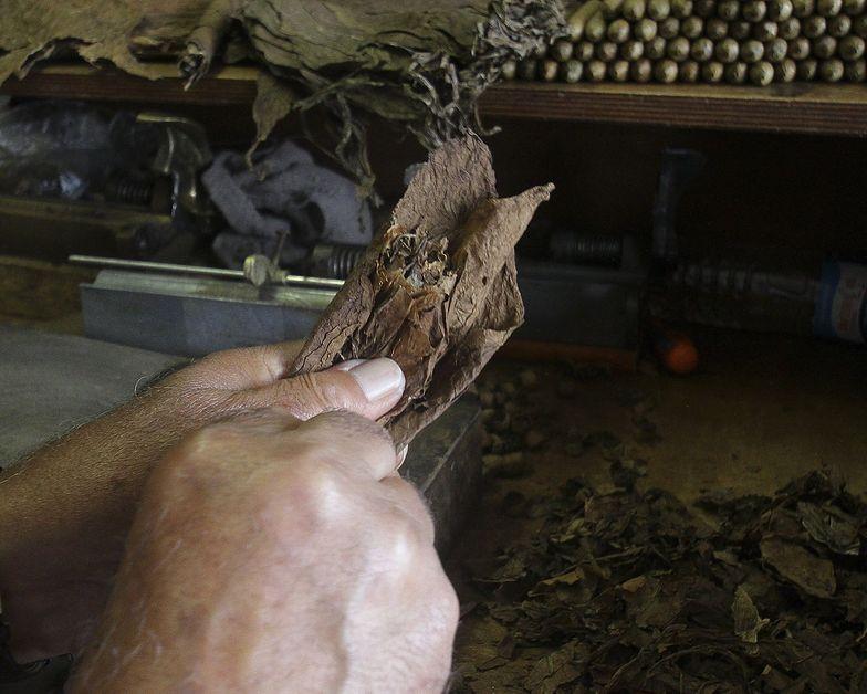 Kubańskie cygara w opałach. Pogoda i słabe zbiory przyczynami kłopotów w produkcji