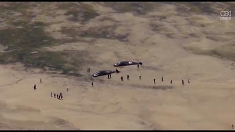 Stado kaszalotów znalezione na plaży