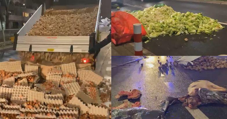 Martwa świnia i warzywa na ulicy. Rolnicy nie musieli marnować żywności