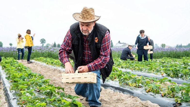 Jan Krzysztof Ardanowski wysyłał nauczycieli do zbierania truskawek. Teraz postanowił wybrać się na pole sam