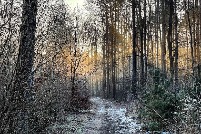 PiS zamieni las na spalarnię śmieci? Leśnicy załamują ręce