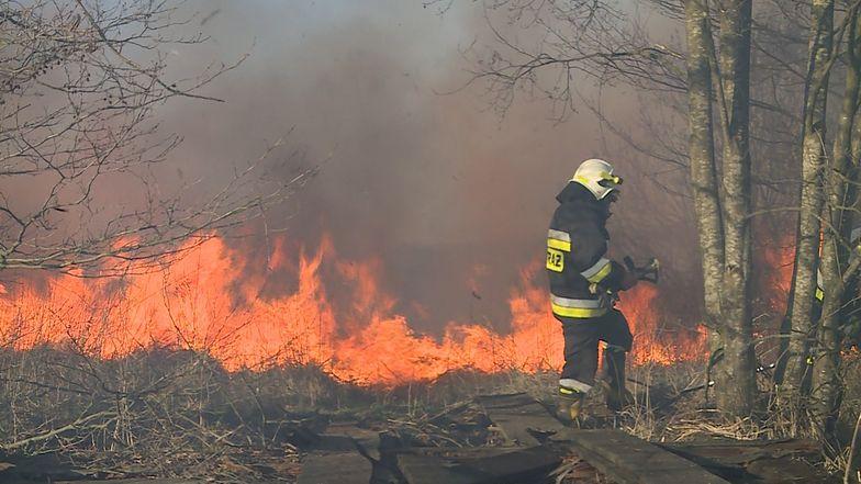 Kary za wypalanie traw mogą wzrosnąć do nawet 30 tys. zł - informuje resort środowiska