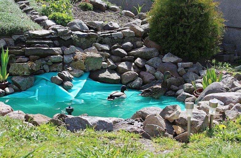 Oczko wodne pozwala zatrzymać wody opadowe lub roztopowe.