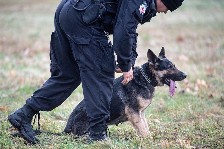 Emerytury dla psich policjantów. Sejm przegłosował ustawę