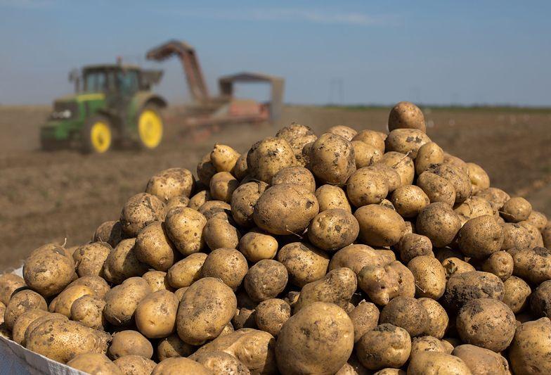 Rolnictwo. Warzywa i owoce w sklepach są o kilkaset procent droższe niż w skupie
