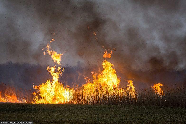 Strażacy walczą z pożarem, który trawi Biebrzański Park Narodowy