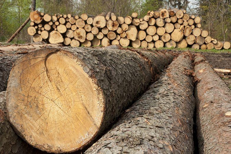 Rozprzedają polskie drewno. Branża grzmi: potrzebny zakaz eksportu