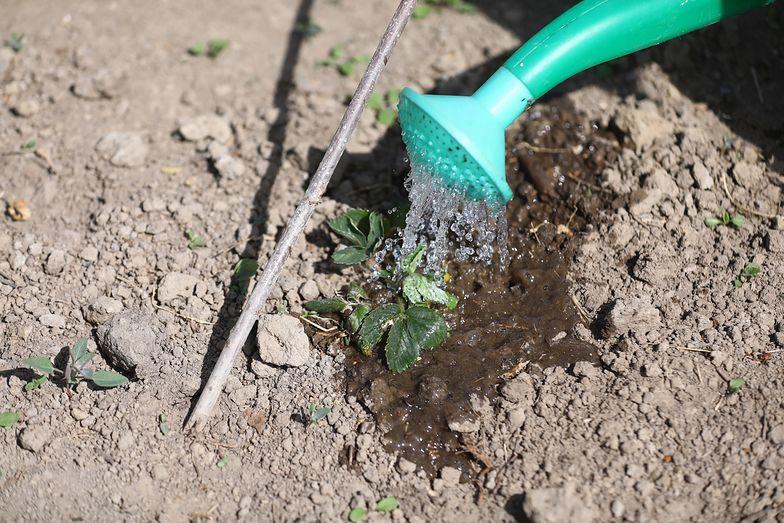 Wytworzenie produktów roślinnych wymaga mniej wody niż pochodzenia zwierzęcego.