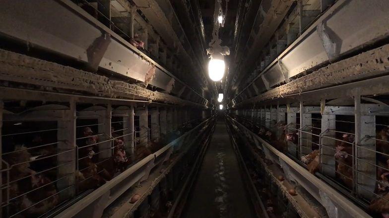 Ceny kurczaka szybują od 5 miesięcy. Za 40 dni będzie katastrofa