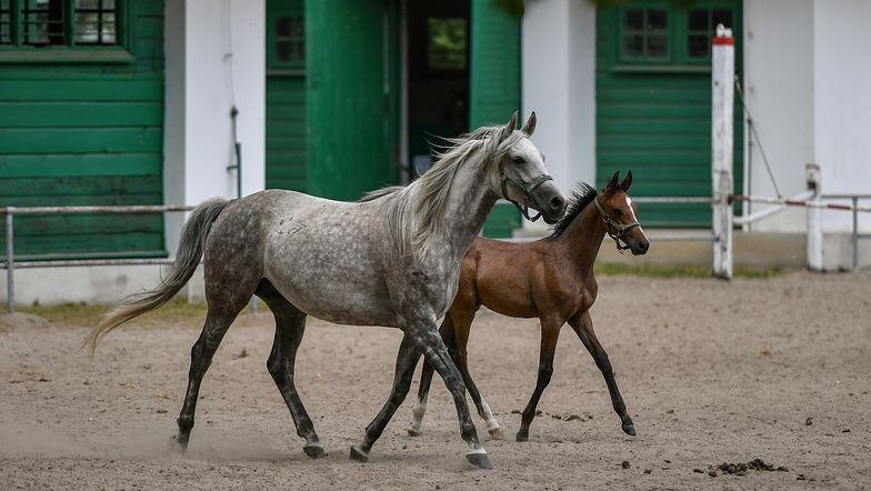 Stadniny koni na dużym minusie. Finanse nigdy nie miały się tak źle