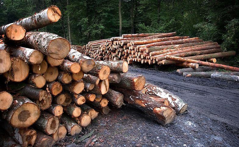 Rząd na ratunek Lasom Państwowym. Drewno będzie palone w piecach