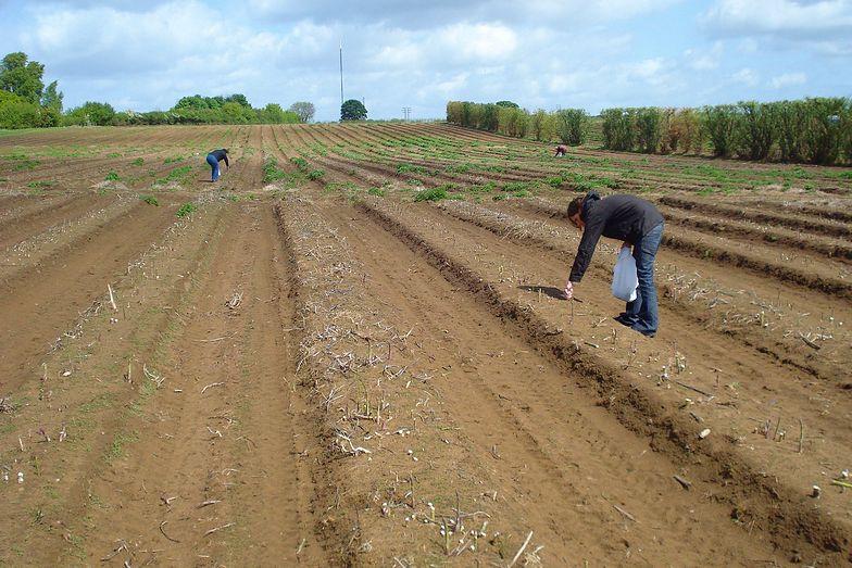 Narodowy Holding Spożywczy. Rolnicy czekają, projekt się opóźnia