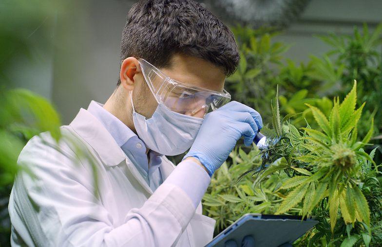 Vabun zmieni się w Cosma Cannabis. Była spółka Majdana ma wyłączność na przejęcie