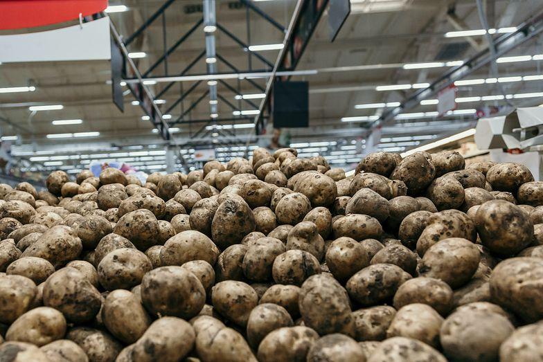 W Polsce rośnie ziemniaczane podziemie. Lewe kartofle zalały rynek