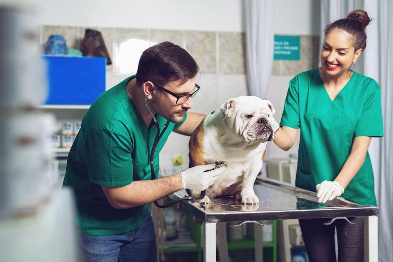 Najpierw Lux Med, teraz Luxvet24. Powstanie duża sieć lecznic dla zwierząt