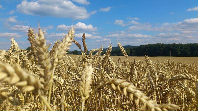 GPW chce jak najszybciej wprowadzać kolejne produkty na rynek rolny.