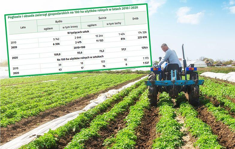 Rolnicy się policzyli. Częściej wykazują główne dochody z pracy najemnej niż z pola