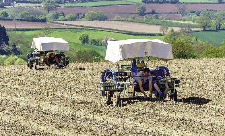 Ubezpieczyciele stosują szereg trików, by nie wypłacać polisy rolnikom
