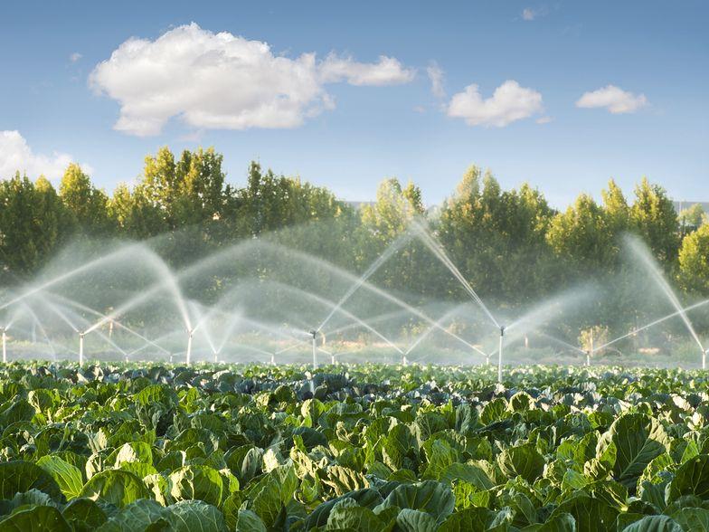 100 tys. zł dotacji na inwestycje w nawadnianie gospodarstwa