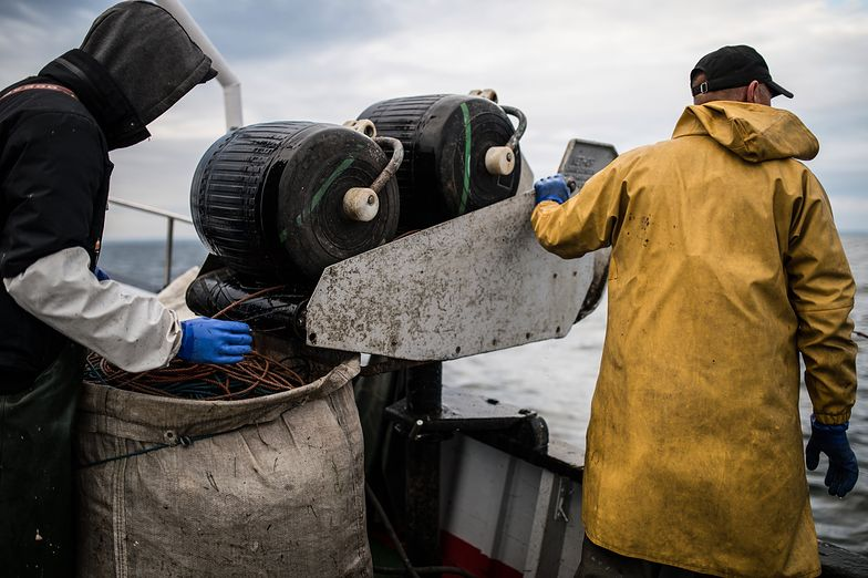 Unia Europejska szuka sposobu na to, jak zrekompensować rybakom zakaz połowów dorsza.