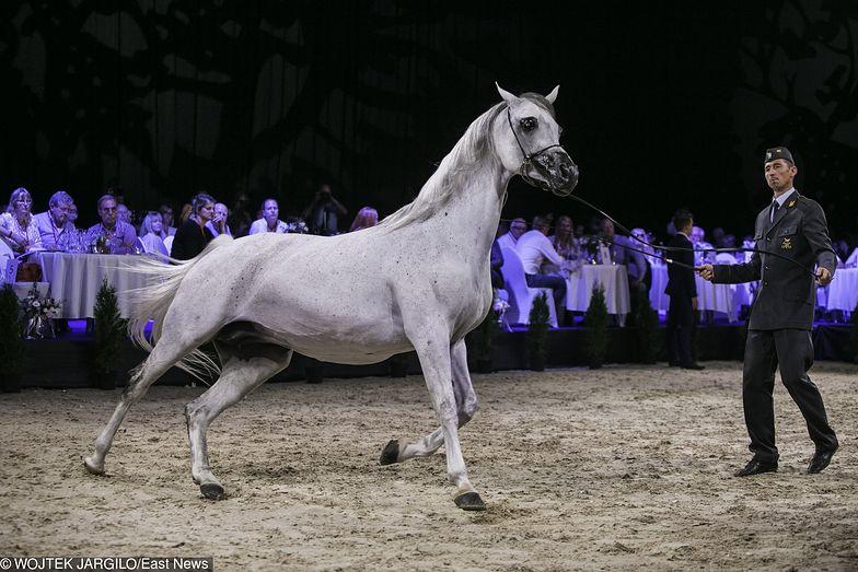 W tym roku aukcja Pride of Poland przyniosła 1,4 mln euro zysku