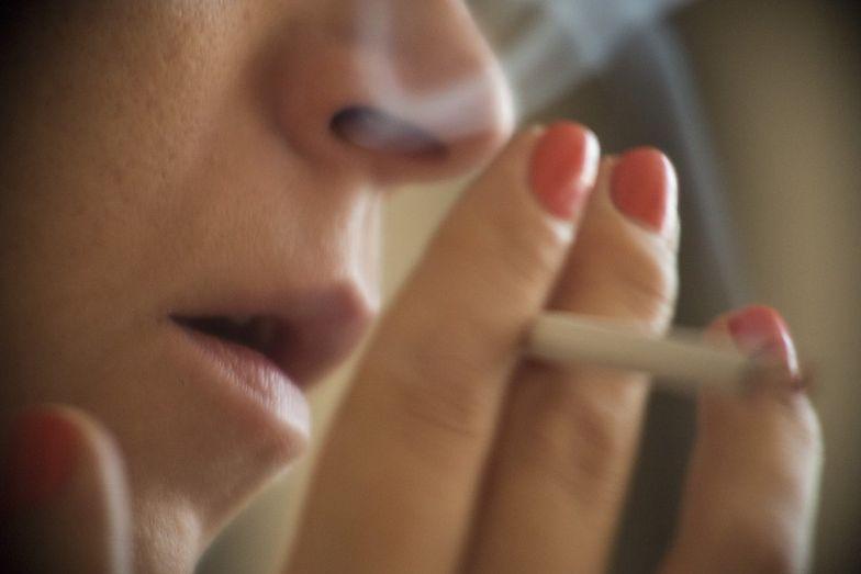 Kurczy się papierosowa szara strefa. Pojawił się jednak nowy problem - nielegalne fabryki wewnątrz Wspólnoty