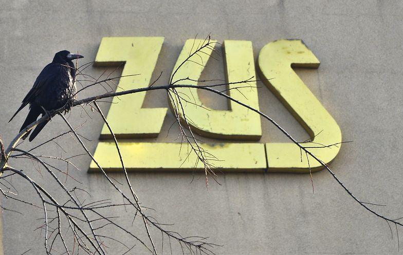 ZUS: Ukraińcy uzbierali najwięcej. Sprawdź, ilu pracowników zza granicy ma swoje konta w Polsce