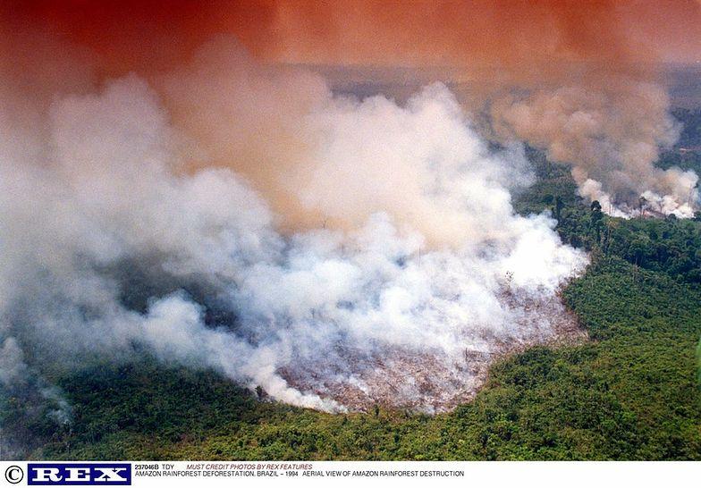 W tym roku liczba pożarów w Brazylii wzrosła o 83 proc.