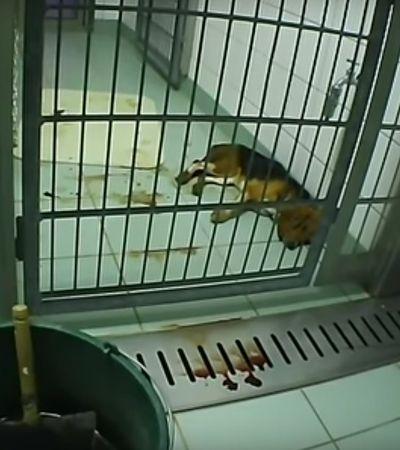 """Barbarzyńskie eksperymenty na zwierzętach. """"To laboratorium działa, jestem tuż przed nim i słyszę kwilenie psów"""""""