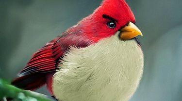 Prawie 140 tysięcy dni na dobę gramy w Angry Birds