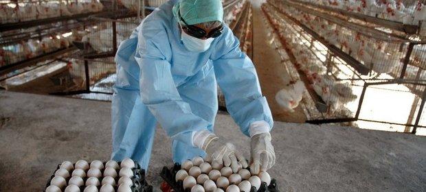 Ceny jaj zdrożały już o 30 proc., a to jeszcze nie koniec.