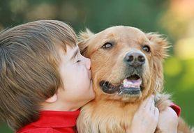 Dogoterapia – co to jest, cele, szkolenie, rasy psów
