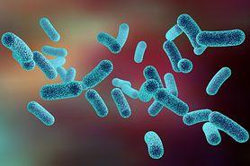 Bakteria coli - objawy i leczenie infekcji u dzieci
