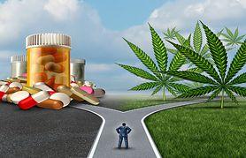 Marihuana lecznicza - zastosowanie w ziołolecznictwie, leczenie nowotwórow