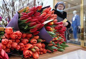 Jak przedłużyć trwałość tulipanów? Mamy sprawdzone triki (WIDEO)