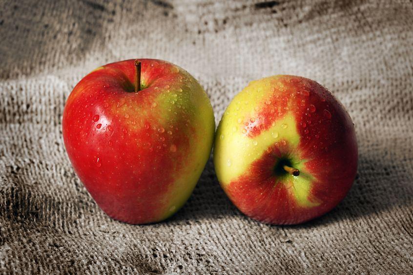Jonagold to polecana odmiana jabłek