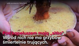 Jak bezpiecznie zbierać grzyby? (WIDEO)