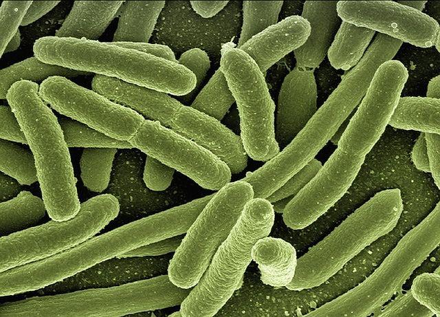 Chroni przed infekcjami