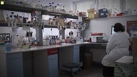 Enigma: Komórki macierzyste (WIDEO)