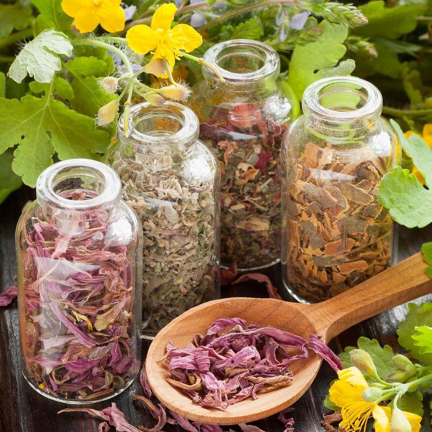 Poznaj zioła, które leczniczo działają na nasz układ oddechowy