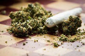 Marihuana uszkadza mózg. Nastolatkowie są szczególnie zagrożeni