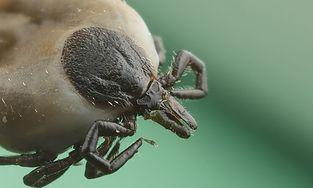 Jak rozpoznawać owady i ich ukąszenia?