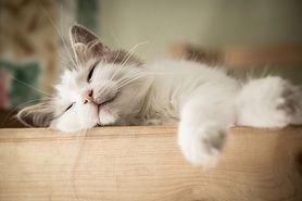 Julka i koty, Kocich historii część II (recenzja)