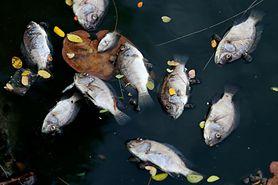 Najgorsza ryba do jedzenia. Unikaj hodowlanego łososia (WIDEO)