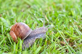 Jak się pozbyć ślimaków z ogrodu? 4 łatwe i bezpieczne sposoby