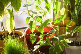 Przetrzyj liście kwiatów majonezem. Niesamowity efekt