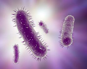Lekooporna bakteria New Delhi zaatakowała Polskę - zakażonych jest już 1100 osób