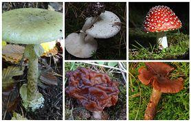 5 najbardziej trujących grzybów w Polsce. Koniecznie musisz je znać